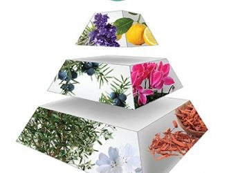 Piramidy zapachowe